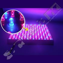 led lichtplatte zur k nstlichen beleuchtung von pflanzen blumen gem se immer. Black Bedroom Furniture Sets. Home Design Ideas